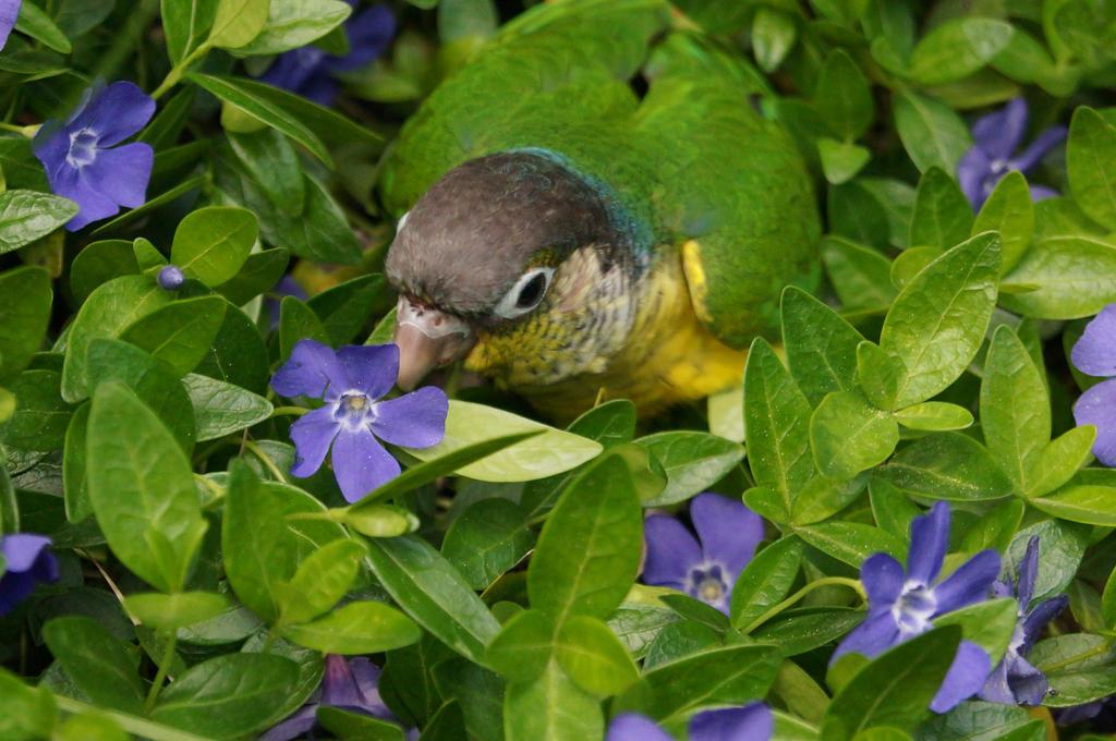Tiny Blended Birds by shinigamisgem