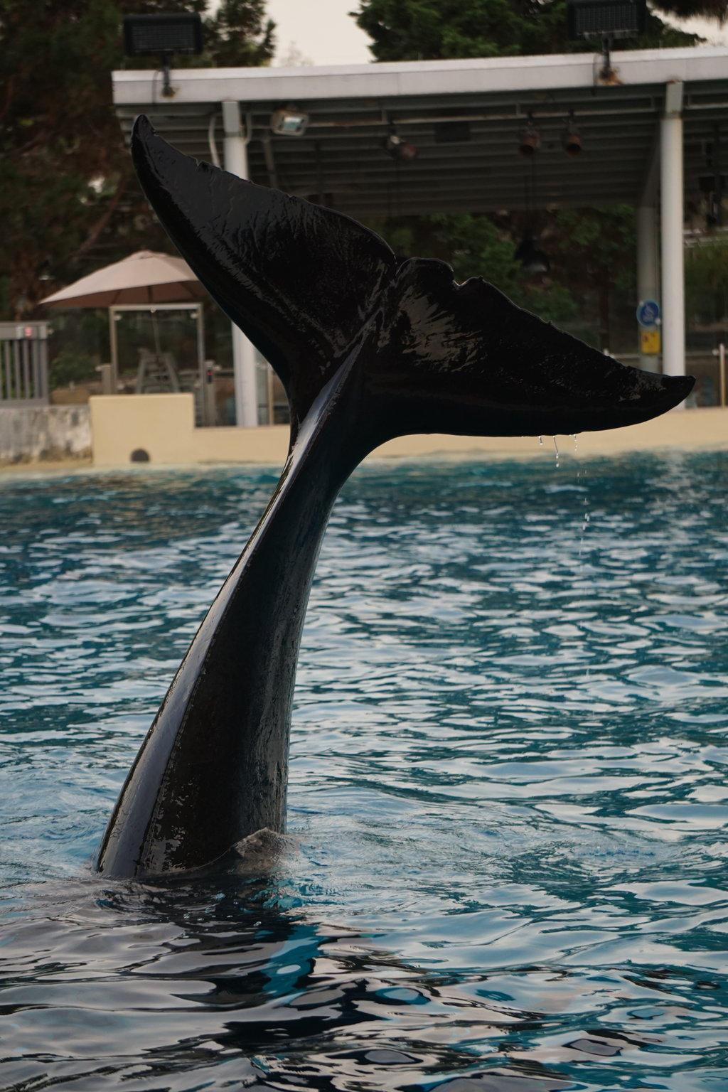 Whale Tale by shinigamisgem