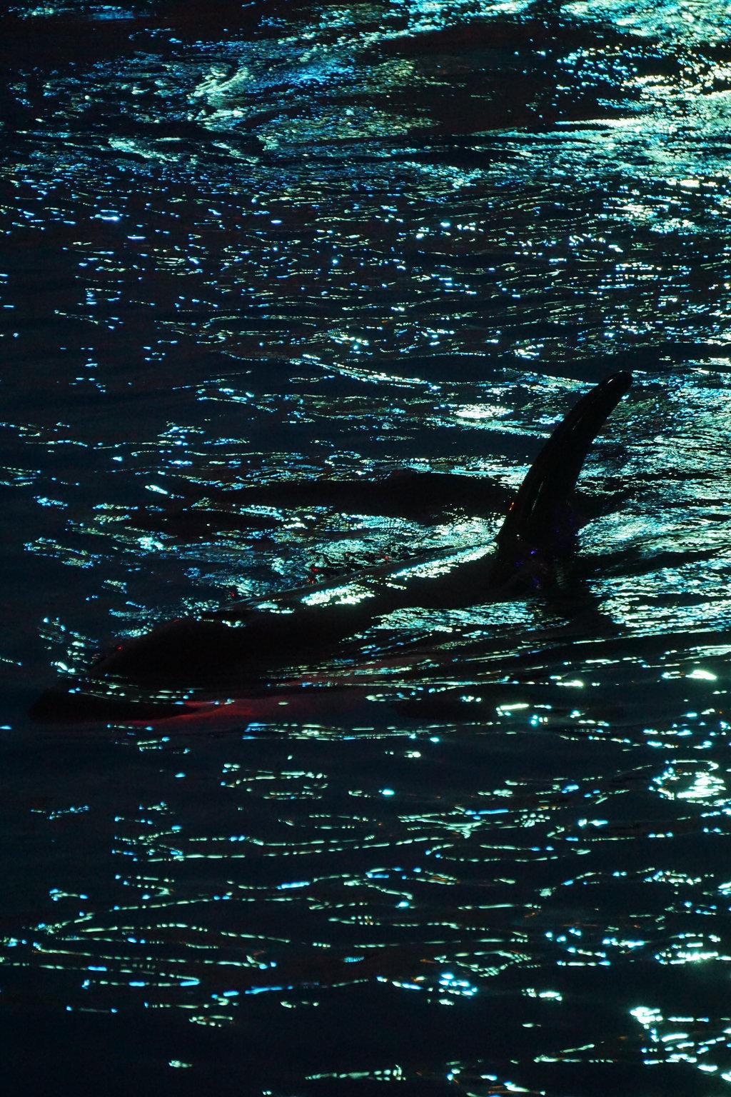 Nighttime silhouette by shinigamisgem
