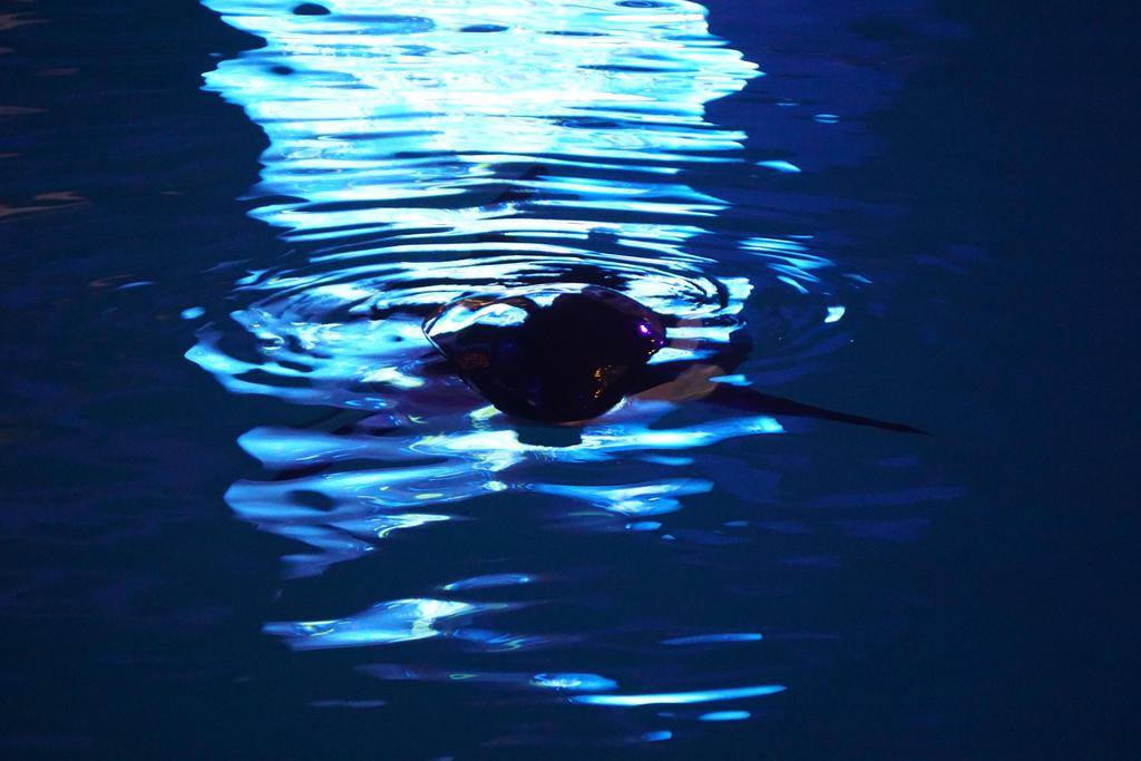 Dark Depth Silhouette by shinigamisgem