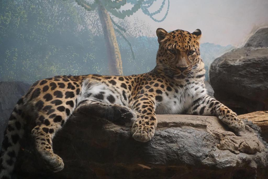 Leopard look by shinigamisgem
