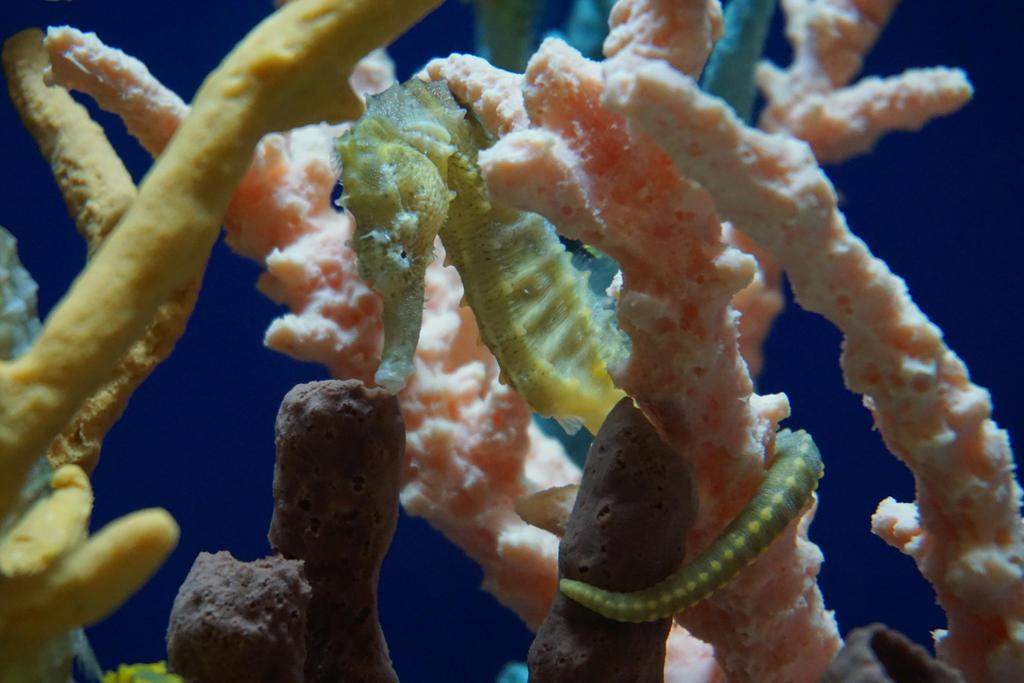 Sea Horse 1 by shinigamisgem