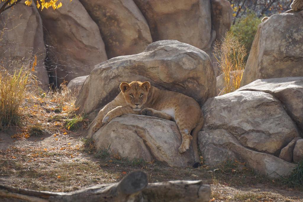 Sassy Lion Cub by shinigamisgem
