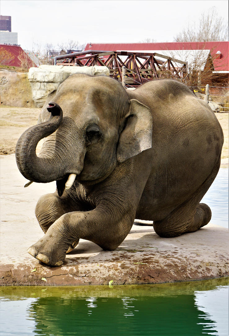 Elephant Kneel by shinigamisgem