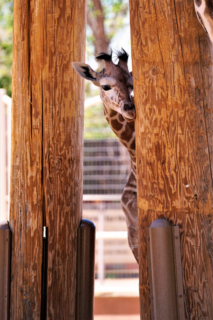 Baby Giraffe Doby by shinigamisgem