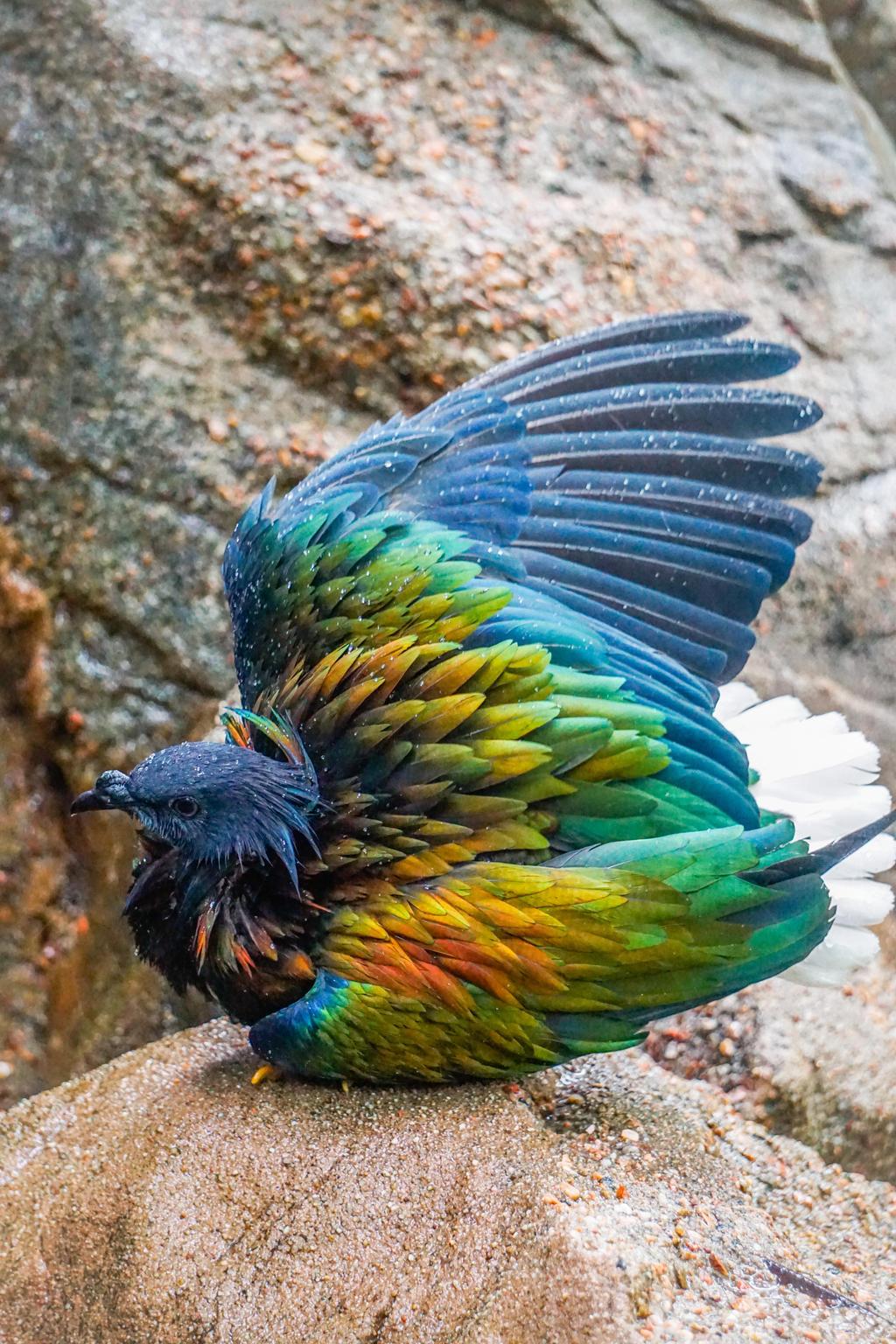 Feather bath by shinigamisgem