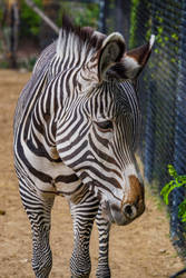 Handsome Stripes