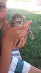 A little kitten pic