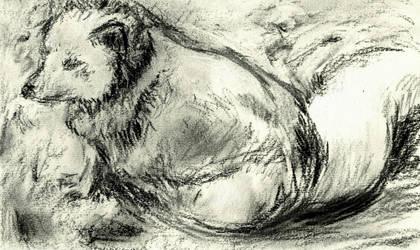 Polar fox by vireosy
