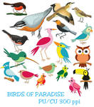Birds Of Paradise Elements