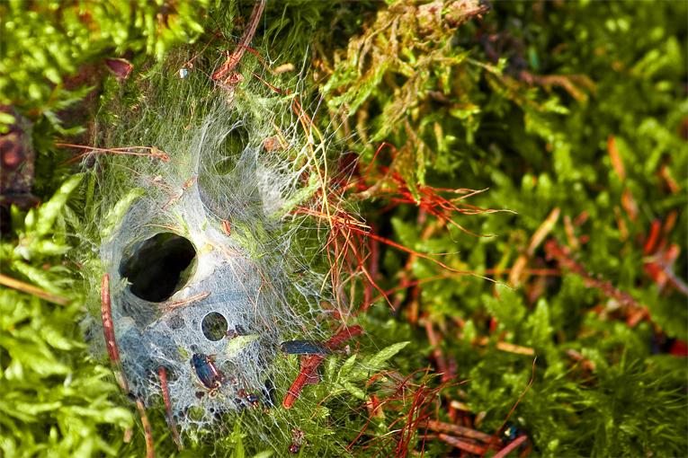 Spider's Gate by kuma-x