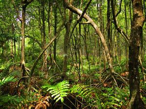 Mangrova Forest - FOR SALE