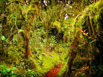 Mossy Forest - FOR SALE