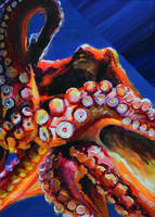 Octopus Study by ChipWhitehouse