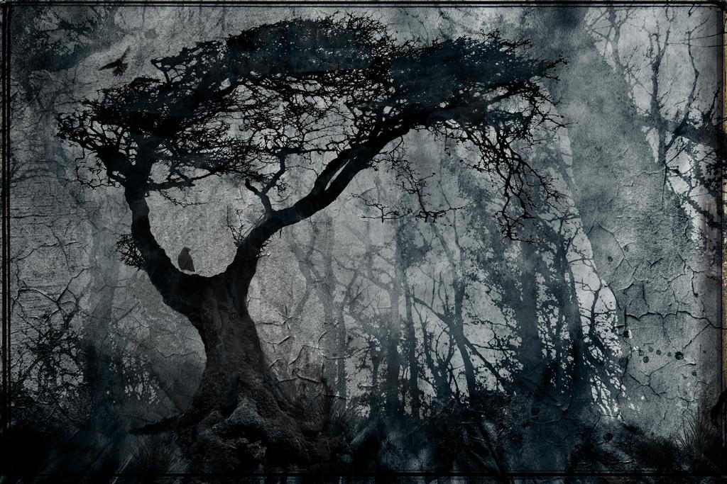 Dark Woods By Struckdumb On Deviantart