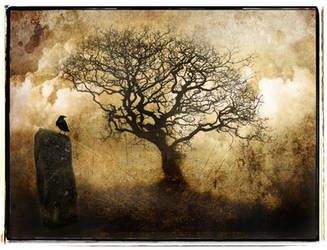 Stone and Tree by struckdumb