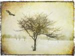 Snowfall by struckdumb