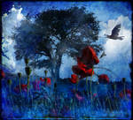 Poppy Dream
