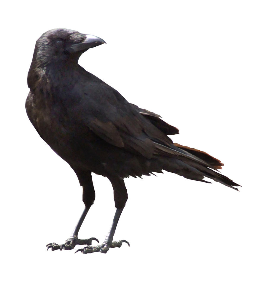 crow cut out by struckdumb on deviantart