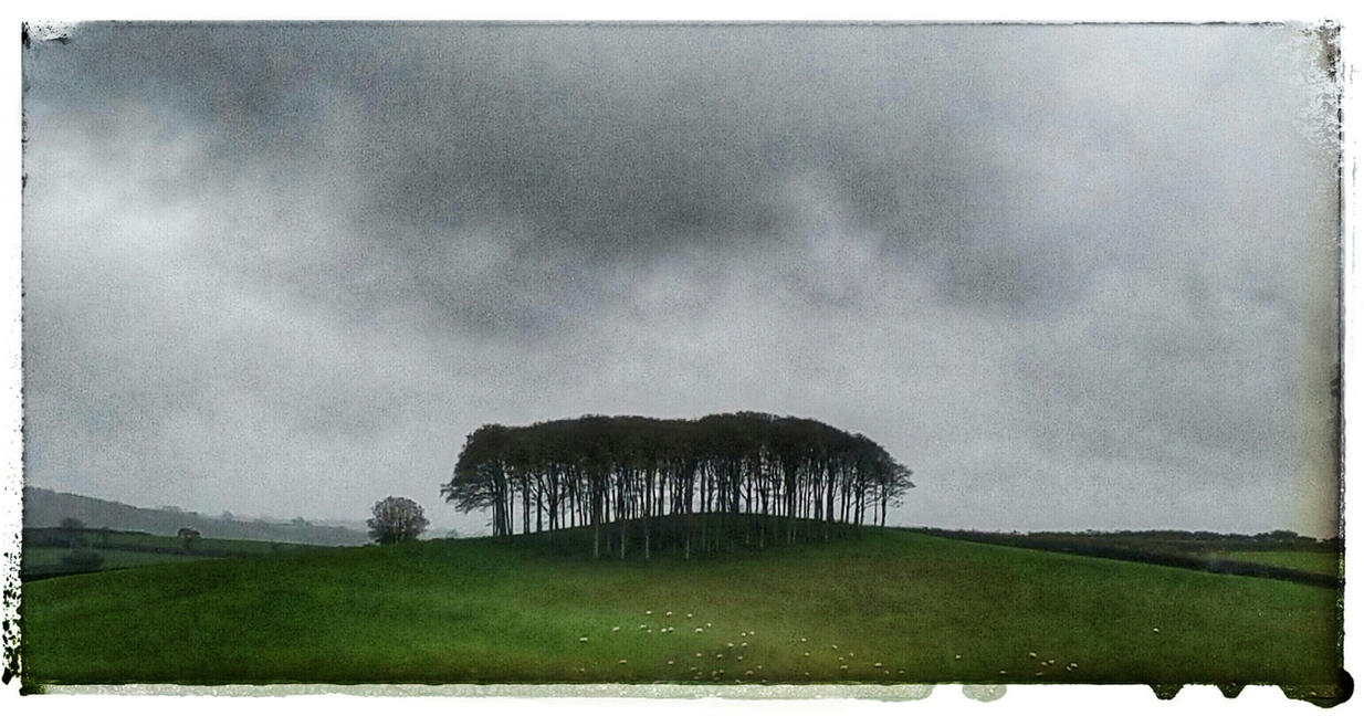 Fairy Wood by struckdumb