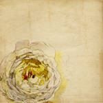Watercolor Dreams Number8