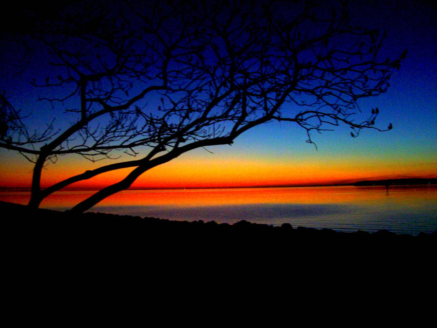 http://fc03.deviantart.com/fs21/i/2007/251/f/3/sunset_by_bygracefromgod9.jpg