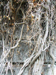 roots on city wall