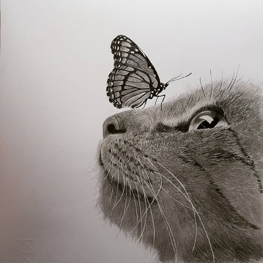 Cat Butterly