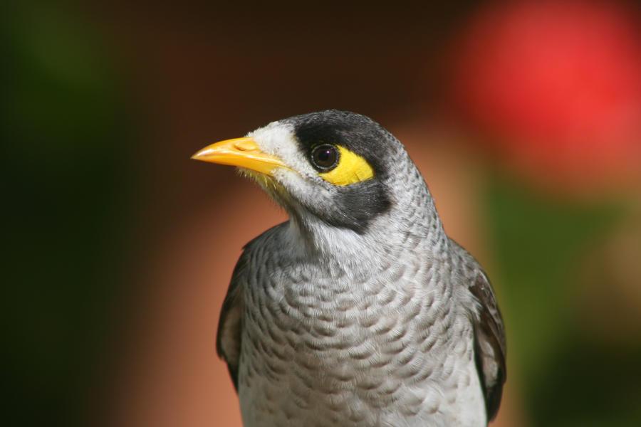 What bird style