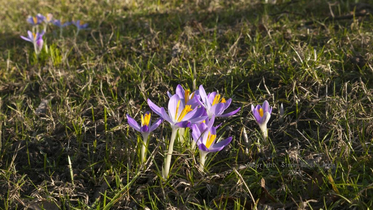Earliest Spring By Rasgonras On Deviantart