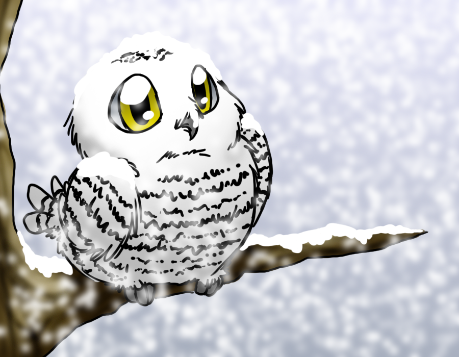 cute snowy owl wallpaper