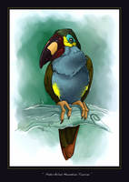 Plate-billed mountain toucan by ObsidianGecko