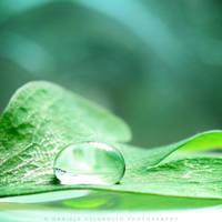 Green by dandelgrosso