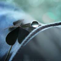 Clover by dandelgrosso