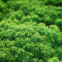 Green Cradle by dandelgrosso