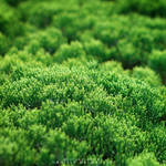 Green Cradle