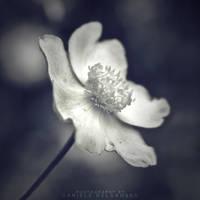 Spotlight by dandelgrosso
