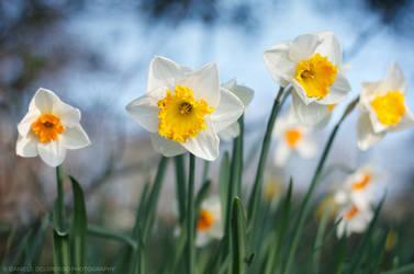 Easter Bloom