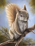 Squirrel by Reighnard