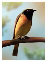 Redstart bird