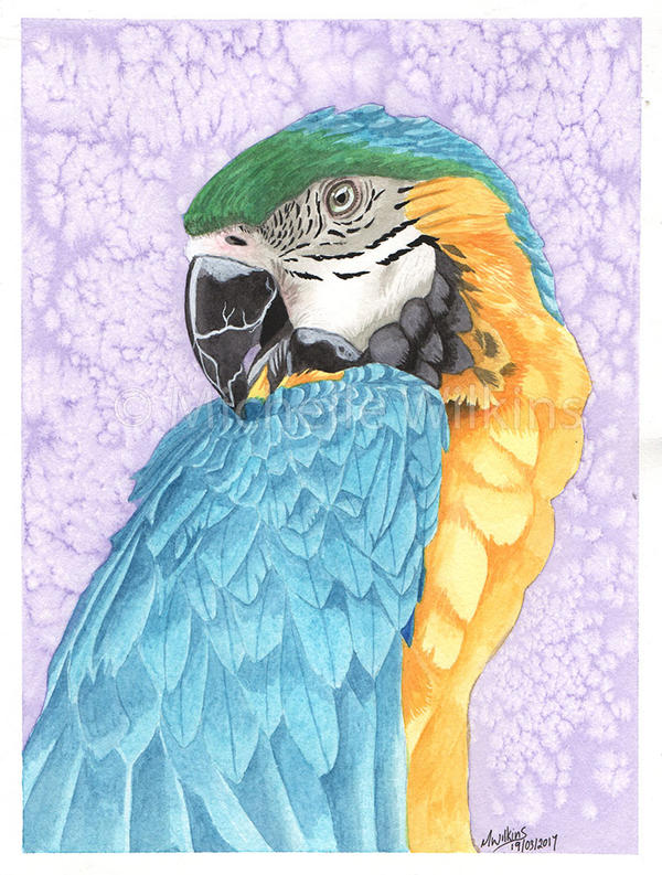 Blue and Gold Macaw Watercolour by DragonsDust