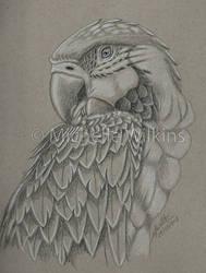 Grey scale Macaw by DragonsDust