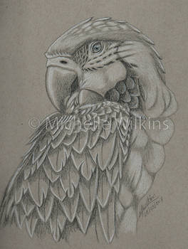 Grey scale Macaw