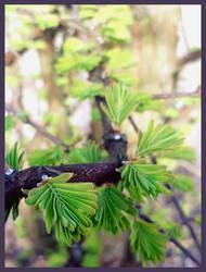 Green shoots by Mrowka333
