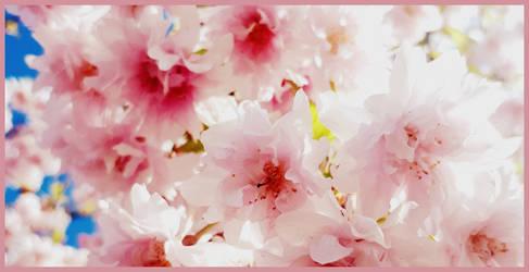 Japanese cherry by Mrowka333