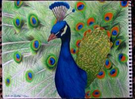 Peacock by Frankenska13