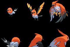 Bravest Bird #661 - 663 Sprites 80x80