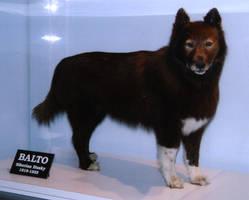 Balto taxidermy by thylobscene