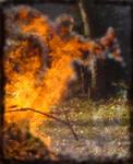 Fire Flight by Queen-Mum