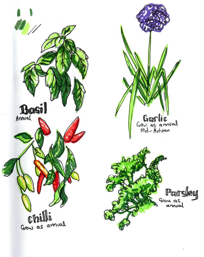 Plant Sketches by ApianJunkyard